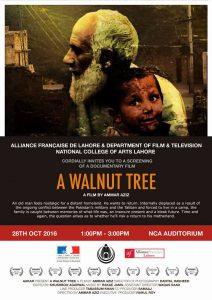 A walnut tree @ National College of Arts   Lahore   Punjab   Pakistan